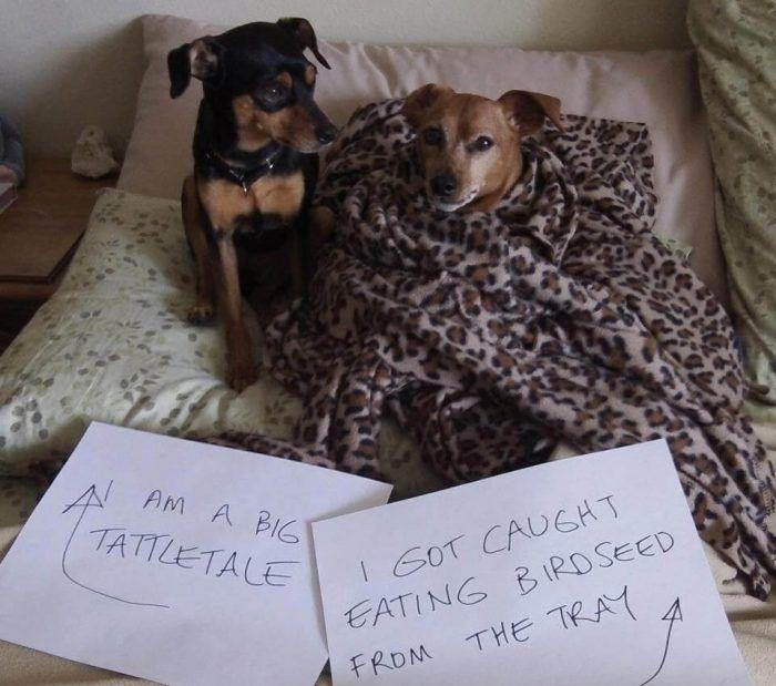 Funny Dog Shaming Animal Shaming Dog Shaming Dog Quotes Funny