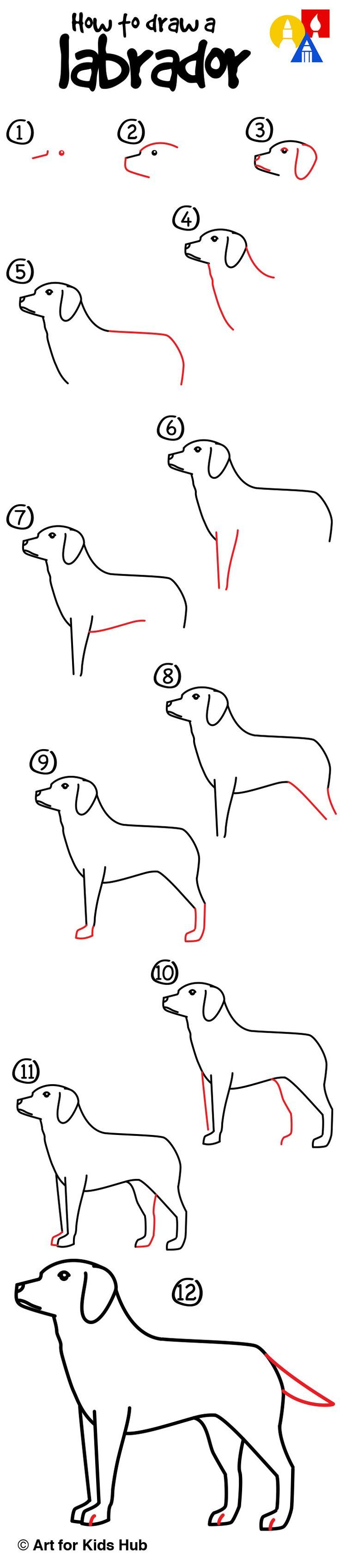How to draw a yellow labrador!