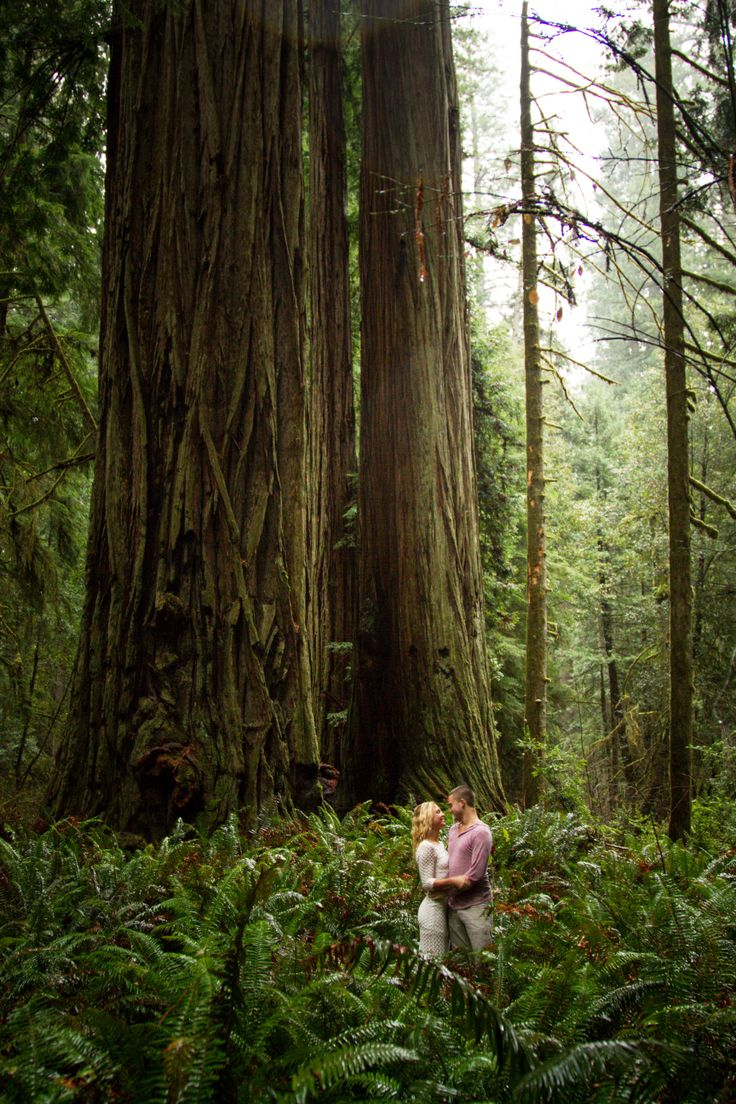Redwood Forest Engagement Session by Nikita Lee