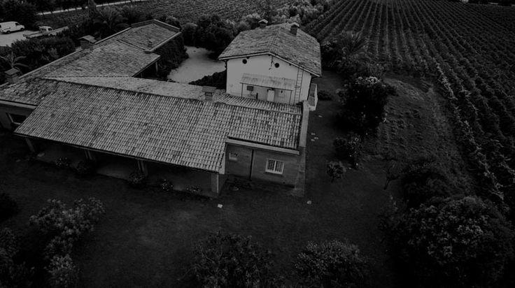 Cantine Lupo, Syranto