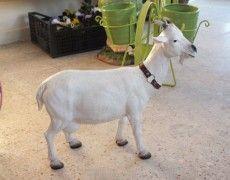 Cyprus Goat Statue