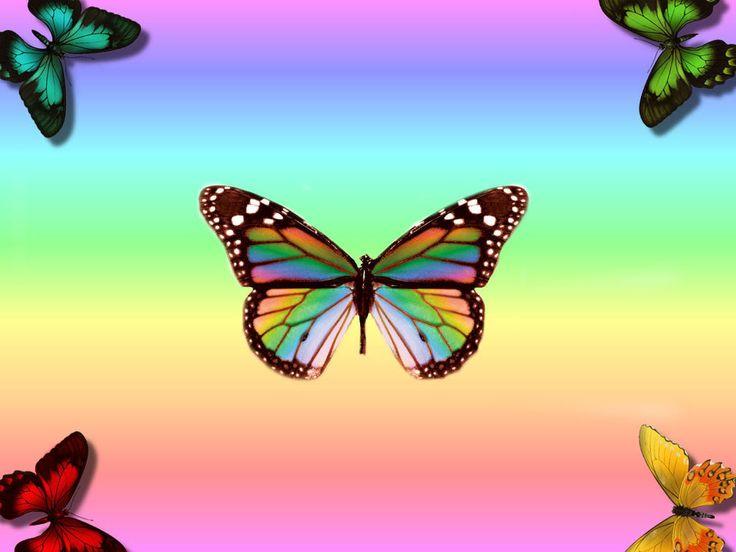 Butterfly Wallpaper Rainbow Butterfly Wallpaper Hd: Free_butterfly_wallpaper_desktop.jpg (1024×768)
