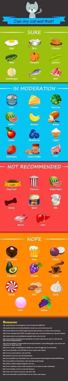 "Can my cat eat that? 40 human foods that are safe, dangerous, and some in the middle that our cats eat. <a href=""http://catoverdose.com/what-do-cats-eat-a-look-at-40-human-foods/"" rel=""nofollow"" target=""_blank"">catoverdose.com/...</a> See more at - Catsincare.com"