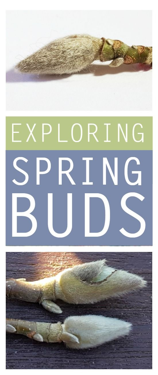 Exploring spring buds with children #spring #outdoors #plants #naturelover