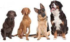 comment repousser les chiens avec des répulsifs naturels