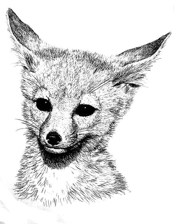 Cute Baby Fox Coloring Pages Cute Fox Coloring Pages Relistik Realistic Grey Fox Coloring In 2020 Fox Coloring Page Animal Coloring Pages Cute Coloring Pages