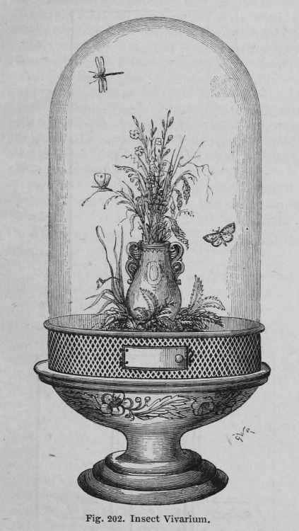 Insect vivarium