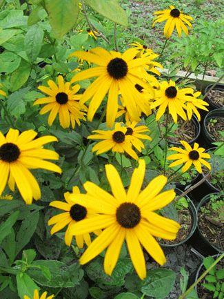 Down Down The Mountain Wildflowers North Carolina