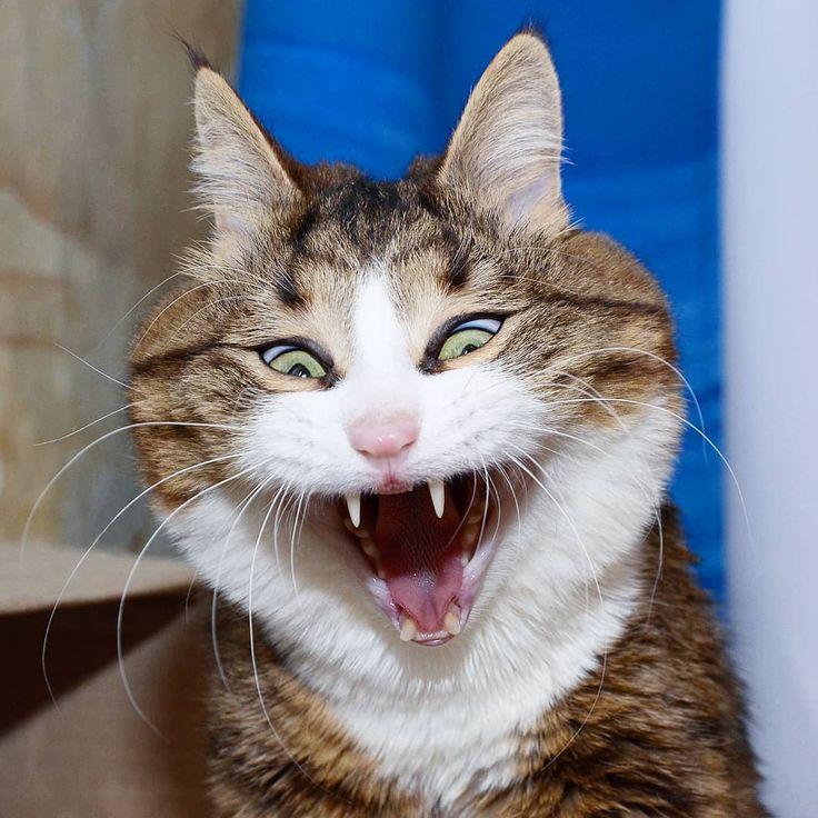 Прикольные кошачьи морды картинки, смотреть