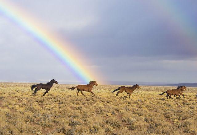 Le Cheval en Soi: La terre des chevaux