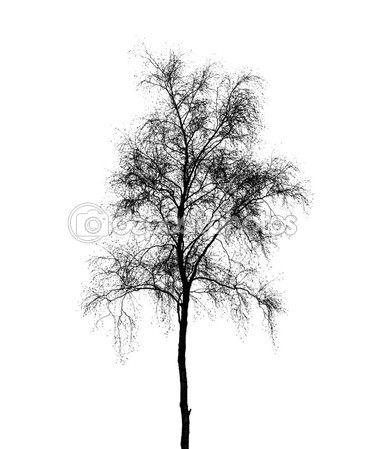 Силуэт дерева березы, изолированные на белом фоне — Stock Image #41906857