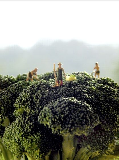 Broccoli farming is hard and dangerous work.
