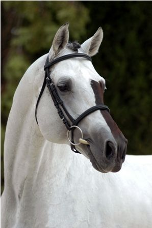 Do you know a horse with unique facial markings like this guy? Our friends at Horse Nation found 15 horses who fit the bill. Check them out and tell us which one is your favorite! If your horse belongs on this list, be sure to post a photo on our wall! (Photo courtesy of http://equinebeasties.tumblr.com/)