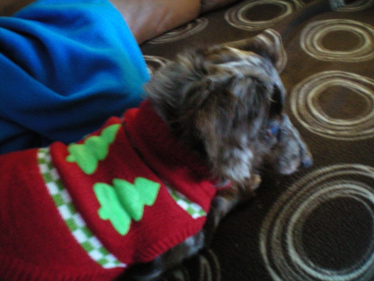 """Maxine's X-mas sweater 1 StonefishSays - """"The Cookie Jar Marketer"""""""