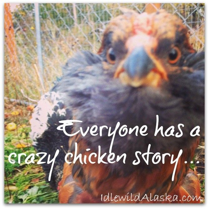 """Every """"Crazy Chicken Lady"""" has at least one crazy, funny chicken story to tell. Enjoy this collection of stories and know you're not alone!"""