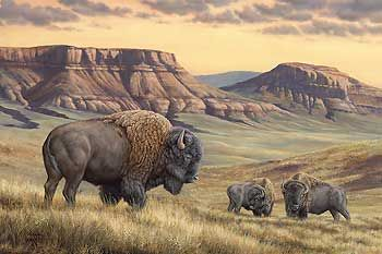 """""""Bison Buttes – Bison"""" by Rosemary Millette"""