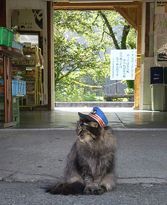 Stationmaster cat at Ashinomaki-onsen station in Aizu-Wakamatsu, Fukushima, Japan 芦ノ牧温泉駅