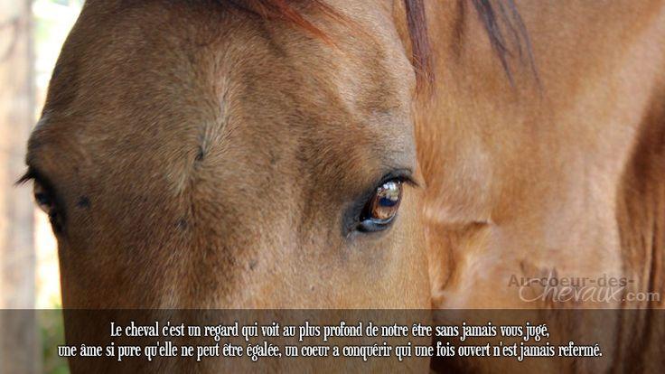 Le cheval c'est un regard qui voit au plus profond de notre être sans jamais vous jugé, une âme si pure qu'elle ne peut être égalée, un coeur a conquérir qui une fois ouvert n'est jamais refermé.