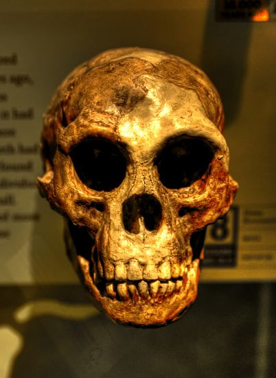 Homo floresiensis or the Hobbit, found on Flores, Indonesia in the distant past.