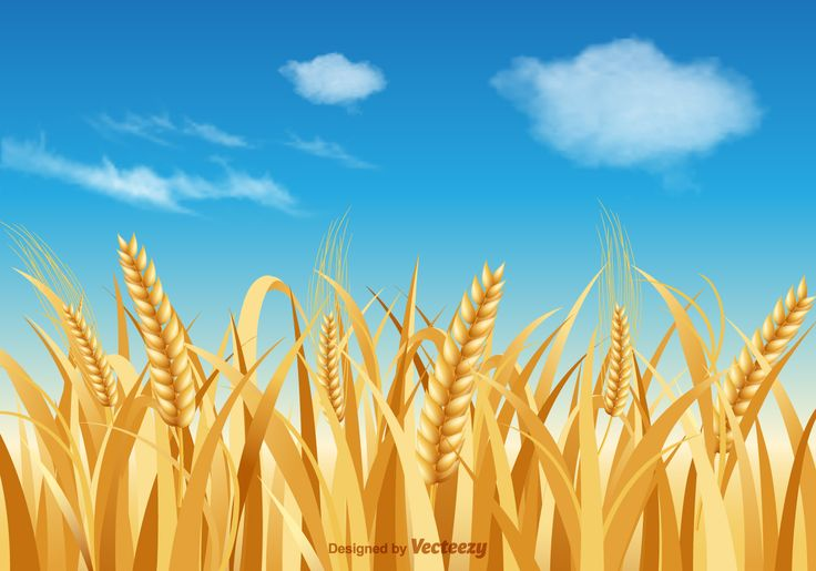 Free vector landscape background with wheat stalk against a blue sky and clouds.