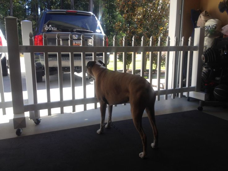 Diy Pet Friendly Gates For The Garage Mobile And Cute