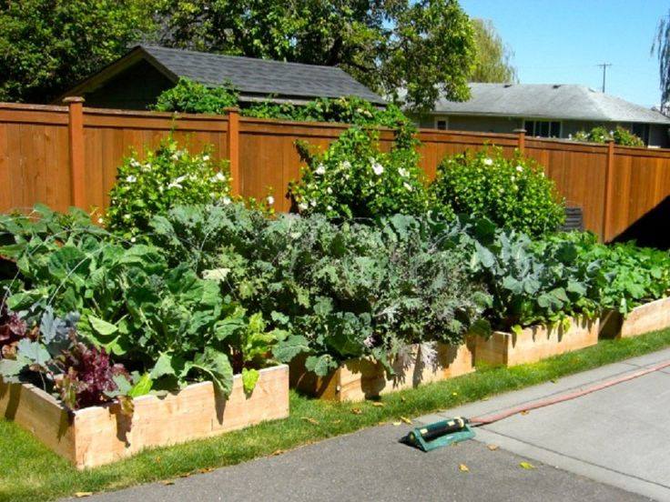 Ideas About Vegetable Garden Layouts On Pinterest - veg garden design ideas