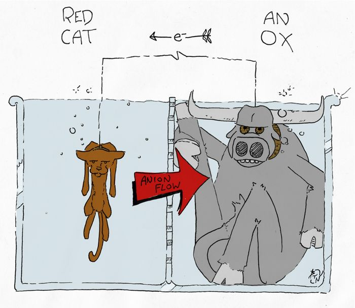 RED CAT, AN OX: Reduction at Cathode, Anode is Oxidation ||| 3 Mnemonic Devices for Redox Reactions (Reduction & Oxidation)
