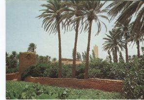 Tlemcen Postcard, Algerie: Ombres de l'Oasis