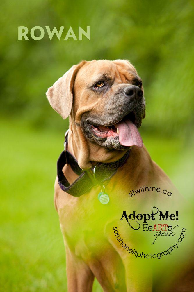 Gentle Giant Dog Rescue Ottawa