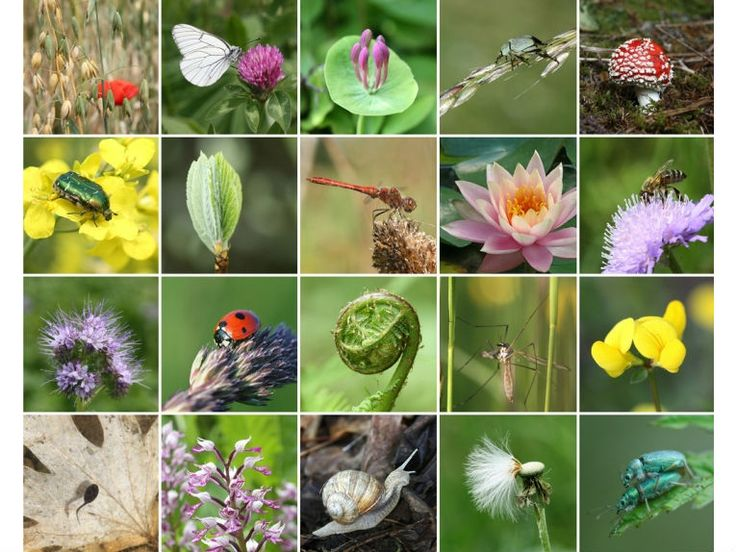 Biodiversity is the term given to the variety of life on Earth and the natural pattern it forms. The biodiversity we see today is the result of millions of years of evolution, initially shaped by natural processes, but in modern times increasingly as a result of human intervention. We are an integral part of the web of biodiversity and we depend on this web, as does every other life form on the planet. #biodiversity