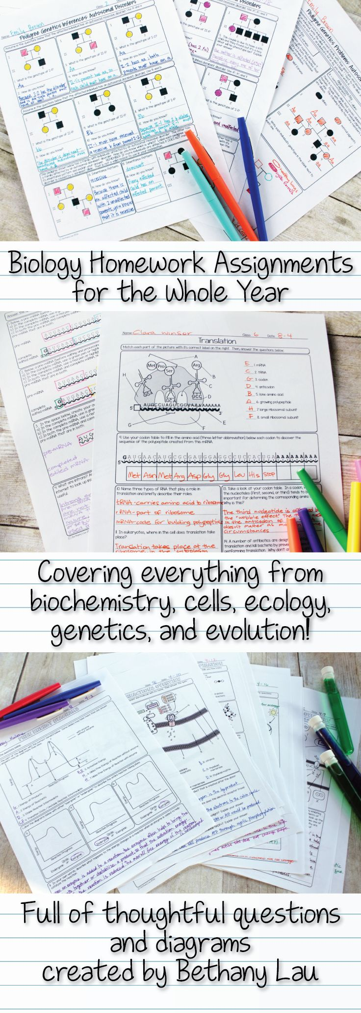 A whole year's worth of biology worksheets or homework pages, full of thoughtful questions, carefully designed diagrams, and unique connections between units.  They cover 10 whole units covering introduction to life, cells, photosynthesis and respiration, cell division, protein synthesis, genetics, evolution, and ecology! Created by Bethany Lau and sold on Teachers Pay Teachers at Science with Mrs. Lau's store.