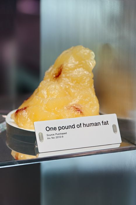 One Pound Of Human Fat