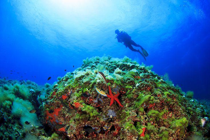 scuba_diving_ibiza