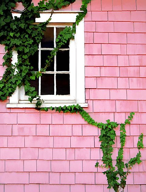 pink house & green vines