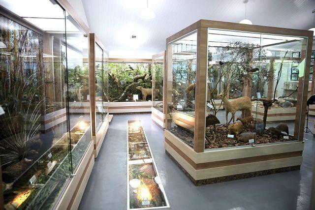 Museu de História Natural de Cascavel. Parque Municipal Danilo Galafassi/ Zoológico Municipal. Rua Fortunato Beber, 2307 - Região do Lago 02.