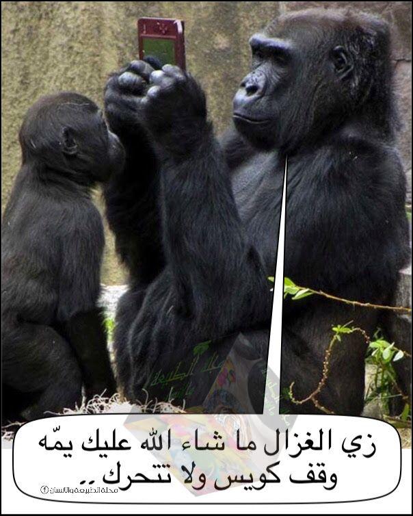 Pin By صوت وصورة Hd On صوت وصورة Hd Gorilla Animals Monkey