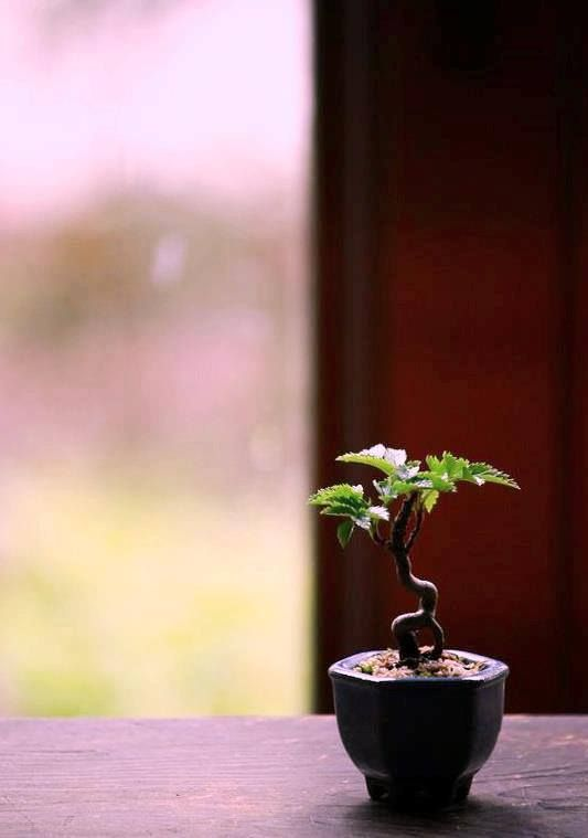 612 Best Bonsai Penjing Kokedama Images On Pinterest