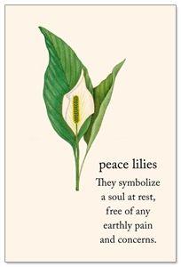 Peace Lilies Condolence Card