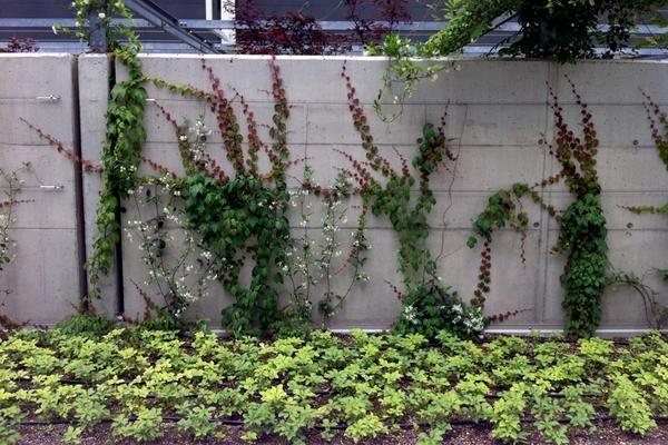 Oltre 25 fantastiche idee su giardini pensili su pinterest - Giardini pensili immagini ...