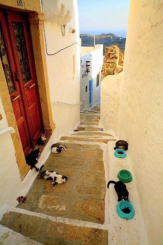 Cats of Patmos -Dodekanisos