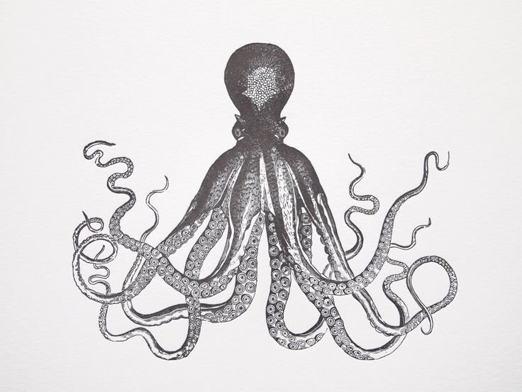 vintage giant octopus drawing - Google Search | A R T ...