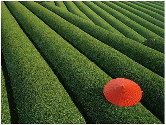 7 Principles Of Design In Art : 7 best mm Áhersla images on pinterest art elements google