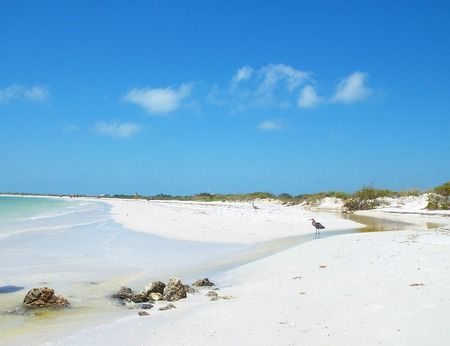 ~Honeymoon Island~Dunedin, Florida~ - beach, birds, blue water, clouds, foilage, nature, ocean, sand, sand dunes, sea, sky, waves, fun!