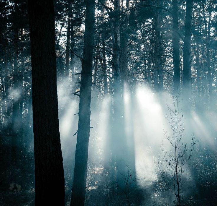 Туманный лес http://muz4in.net/dir/krasota/tumannyj_les/11-1-0-3949