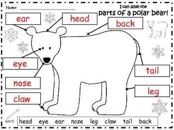 A+ POLAR BEAR: LABEL THE POLAR BEAR - TeachersPayTeachers.com