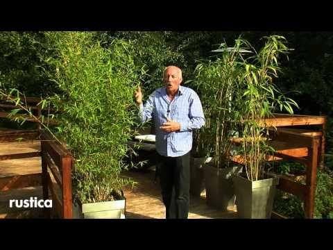 Best 25+ Bambou en pot ideas on Pinterest | Equisetum, Patio de ...