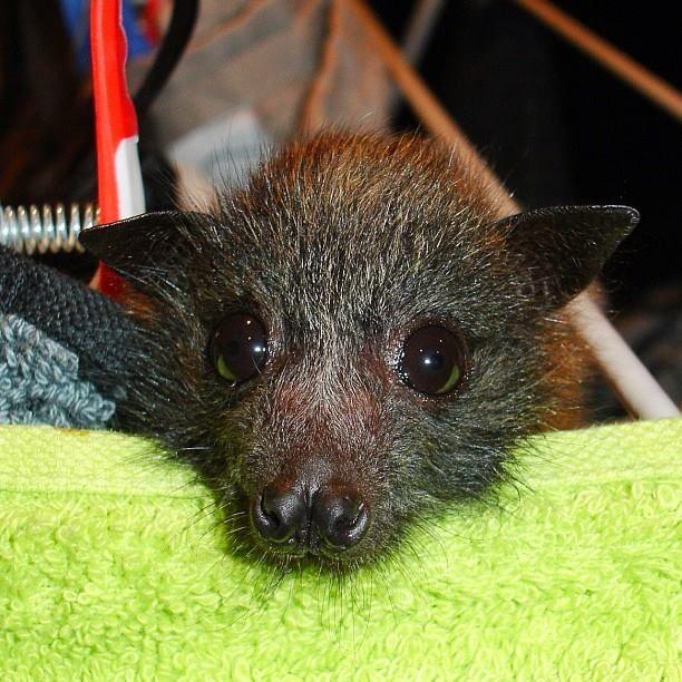 Cute Baby Bats