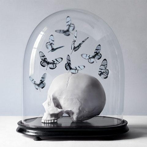 Butterflies and skull