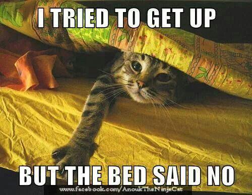 e4a24b5e718c755705c982d73bca66c8 animal jokes sleepy kitty 1176 best lupus images on pinterest chronic pain, chronic,Chronic Illness Cat Meme