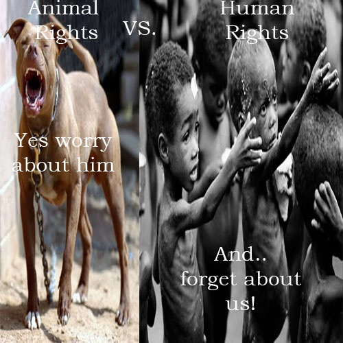 animal vs human Watch animal vs human videos on y8comright now relax and enjoy the great collection of animal vs human related videos.